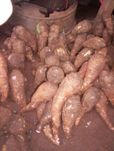HealthBenefitsOfCocoyam28Taro29 - What you didn't know about Cocoyam (Taro) - Health Tips